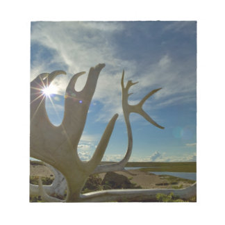 Caribou antlers on the sandy ground in the notepad