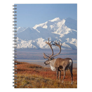 caribou, Rangifer tarandus, bull in fall colors Notebook