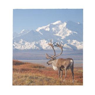 caribou, Rangifer tarandus, bull in fall colors Notepad