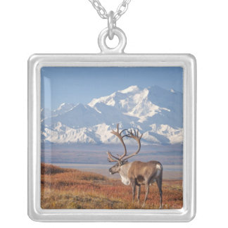 caribou, Rangifer tarandus, bull in fall colors Silver Plated Necklace