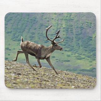 Caribou running in Aniakchak Caldera, Alaska Mouse Pad