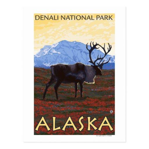 Caribou Scene - Denali National Park, Alaska Postcards