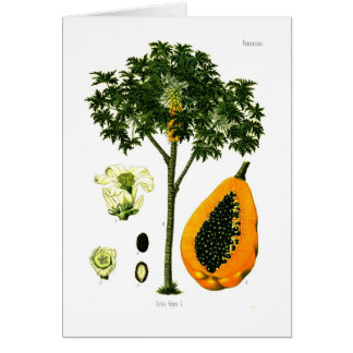 Carica papaya (Papaya) Card