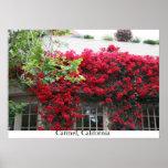 Carmel in bloom posters