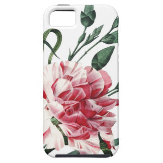 Carnation botanical vintage illustration iPhone 5 cover