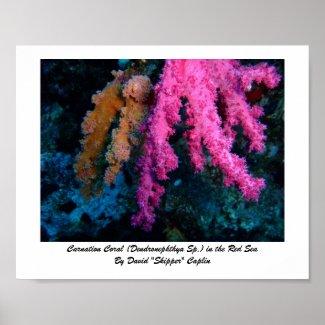 Carnation Coral Print print