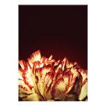 Carnation Fire invitations