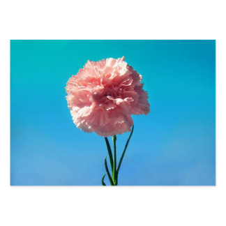 Carnation Pack Of Chubby Business Cards