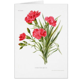 Carnation 'Queen' Card