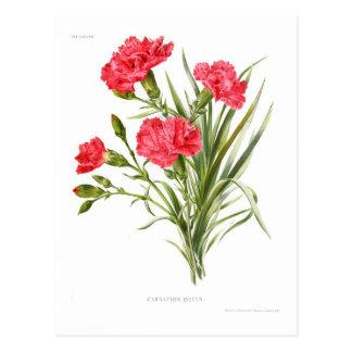 Carnation 'Queen' Postcard