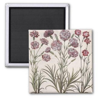 Carnations 1 Caryophyllus flore majore 2 Caryop Magnet