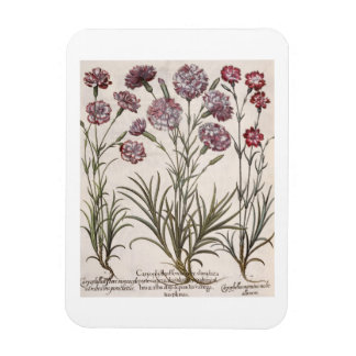 Carnations 1 Caryophyllus flore majore 2 Caryop Rectangle Magnets