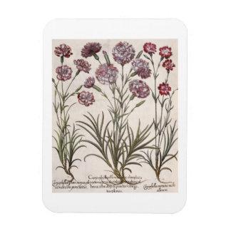 Carnations: 1.Caryophyllus flore majore; 2. Caryop Rectangular Photo Magnet