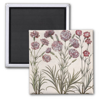 Carnations: 1.Caryophyllus flore majore; 2. Caryop Square Magnet