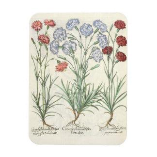 Carnations: 1.Caryophyllus multiplex flore albo; 2 Vinyl Magnet