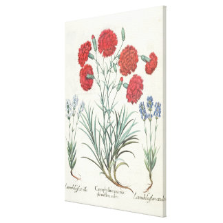 Carnations and Lavender: 1.Caryophyllus maximus pl Canvas Print