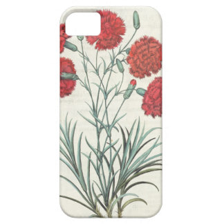 Carnations and Lavender: 1.Caryophyllus maximus pl iPhone 5 Covers