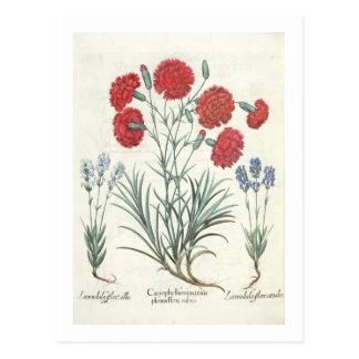Carnations and Lavender: 1.Caryophyllus maximus pl Postcard