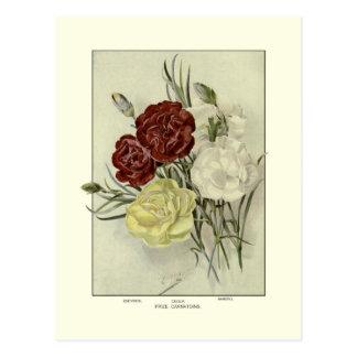 Carnations Postcard
