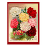 Carnations Vintage Seed Packet Art on Cards