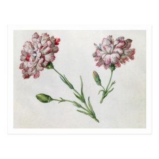 Carnations (w/c on paper) postcard