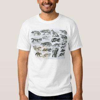 Carnivorous Animals Tshirts