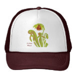 Carnivorous Plant Darlingtonia Cap