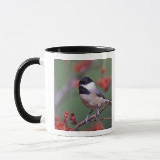 Carolina Chickadee Mug