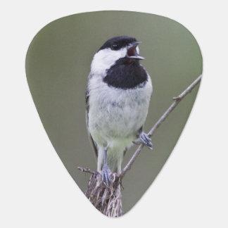 Carolina chickadee singing guitar pick