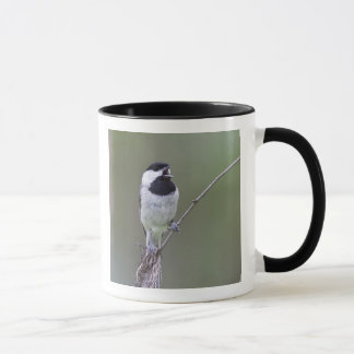 Carolina chickadee singing mug