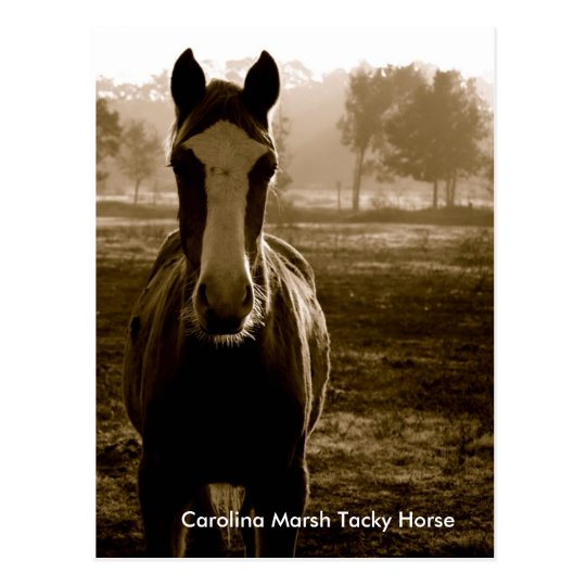 Carolina Marsh Tacky Horse Postcard