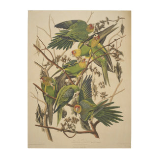 Carolina Parakeet, from 'Birds of America', 1829 2 Wood Wall Art