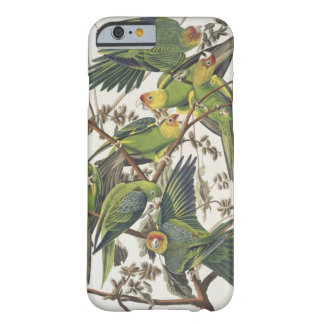 Carolina Parakeet, from 'Birds of America', 1829 Barely There iPhone 6 Case
