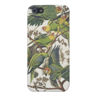 Carolina Parakeet, from 'Birds of America', 1829 iPhone 5/5S Case