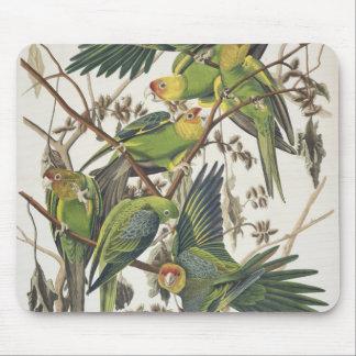 Carolina Parakeet, from 'Birds of America', 1829 Mouse Mat