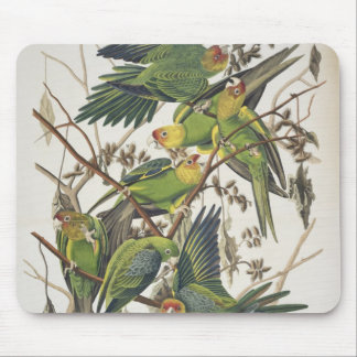 Carolina Parakeet, from 'Birds of America', 1829 Mouse Mat