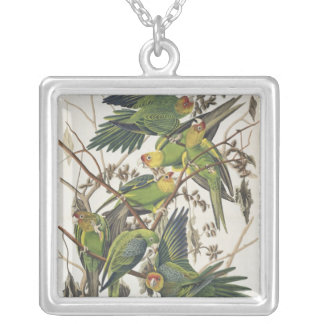 Carolina Parakeet, from 'Birds of America', 1829 Silver Plated Necklace