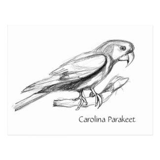 Carolina Parakeet Pencil Sketch Postcard