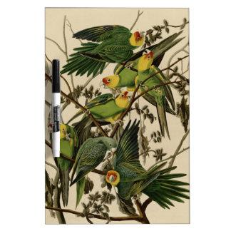 Carolina Parrot Dry-Erase Board