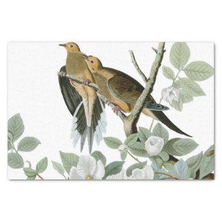 Carolina Pigeon John James Audubon Birds Tissue Paper