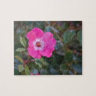 Carolina rose, Pasture rose Jigsaw Puzzle