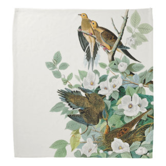 Carolina Turtle Dove, Birds of America by John Jam Bandana