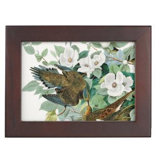 Carolina Turtle Dove, Birds of America by John Jam Keepsake Box