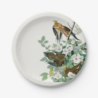 Carolina Turtle Dove, Birds of America by John Jam Paper Plate