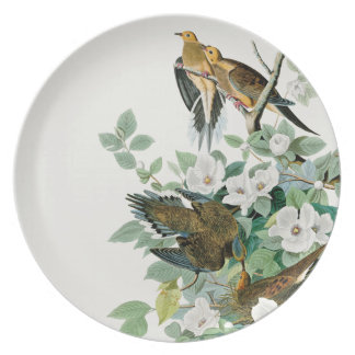 Carolina Turtle Dove, Birds of America by John Jam Plate