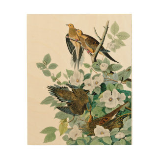 Carolina Turtle Dove, Birds of America by John Jam Wood Wall Decor