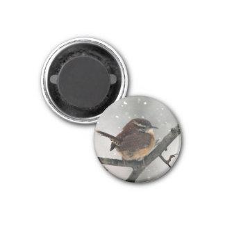 Carolina Wren magnet