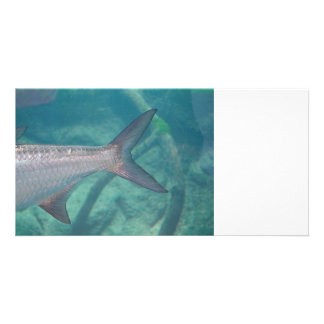 carp tail in water fish animal image picture card