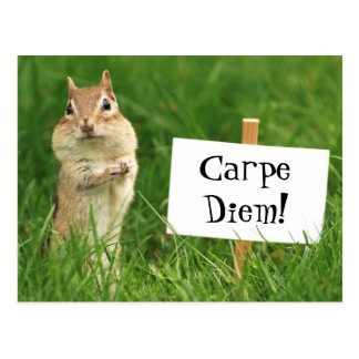 Carpe Diem Chipmunk with Sign Postcard