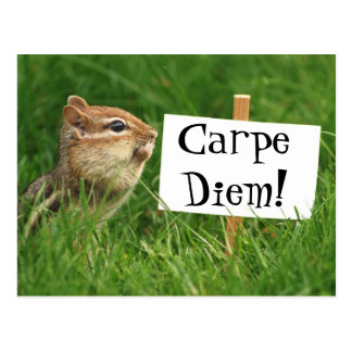 Carpe Diem! Chipmunk with Sign Postcard